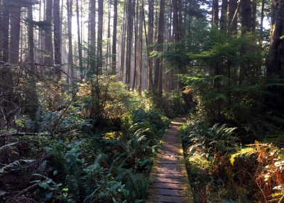 olympic-national-park-coast-boardwalk-FI