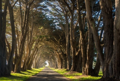 cypress-tree-tunnel-point-reyes-IG