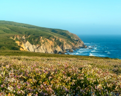 tomales-point-point-reyes-california-IG
