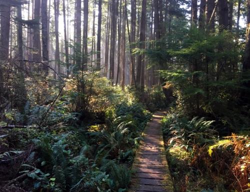 Backpacking the Washington Coast: Olympic National Park