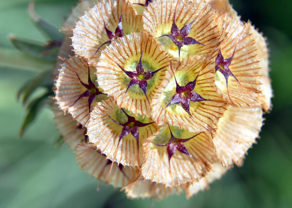 flower-maine-botanical-FI
